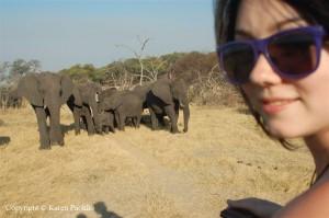 elephant-hazel