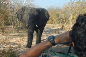 elephant-raphael