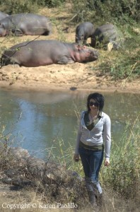 hazel-hippos
