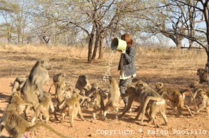 Teresa and the baboons