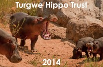 Save some hippos for Christmas – published on Swindonlink, UK