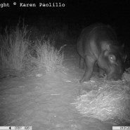 Jan. 2013 – Hay Hippos and Rain
