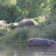 Aug. 2010 – Elephants and Hippos