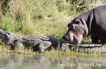 Aug. 2010 – Birds, Crocs and Hippos