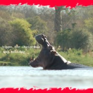 Dec. 2010 – I want a hippo for Christmas