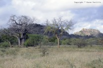 Feb. 2011 – Tracks, crocs, painted wild dogs and others
