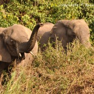 July 2011 – Elephants, Hippos & Snare Patrol