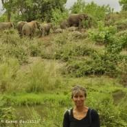 Jan. 2012 – Amazing sleeping elephants
