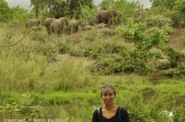 Jan. 2012 – Amazing sleeping elephants