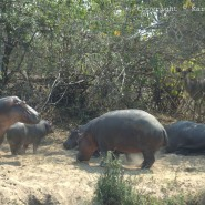 Sep. 2010 – Rain clouds, Kudu, baboons and hippos