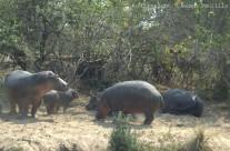 Sep. 2010 – Rain clouds, Kudu, baboons and hippos