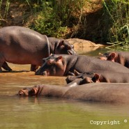 May 2012 – Hippos, other Animals and Plants