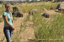 July 2012 – Hippos on Land
