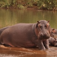 Raffle To Win A Stay For 2 At HIPPO HAVEN (ZIMBABWE) during 2015