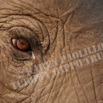 SetA_©_In an elephants eye