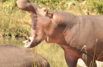 TURGWE HIPPO TRUST 2015