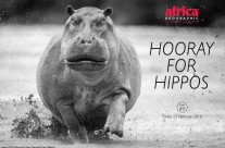 Africa Geographic : Hooray for hippos