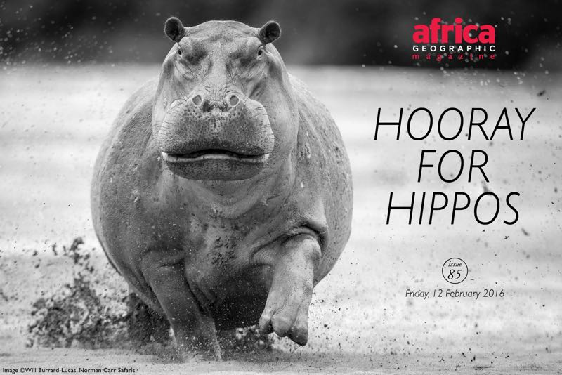 hooray-for-hippos-issue