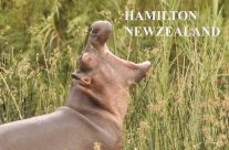 Kids from Southwell Shool (NZ) adopted 3 Hippos