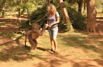 Wonder Women Save Wild Baboon