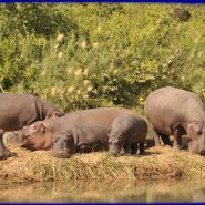 Win a Stay at Turgwe Hippo Trust