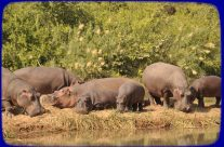 Win a Stay at Turgwe Hippo Trust