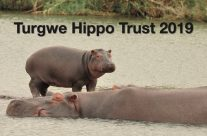 New 2019 Turgwe Hippo Trust Calendar is Available