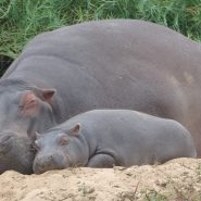 Donate Now to Win a Stay for two at Turgwe Hippo Trust during 2020
