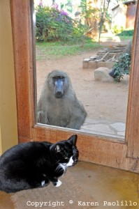 Photo 2 Spazzy baboon at back door and Harry cat