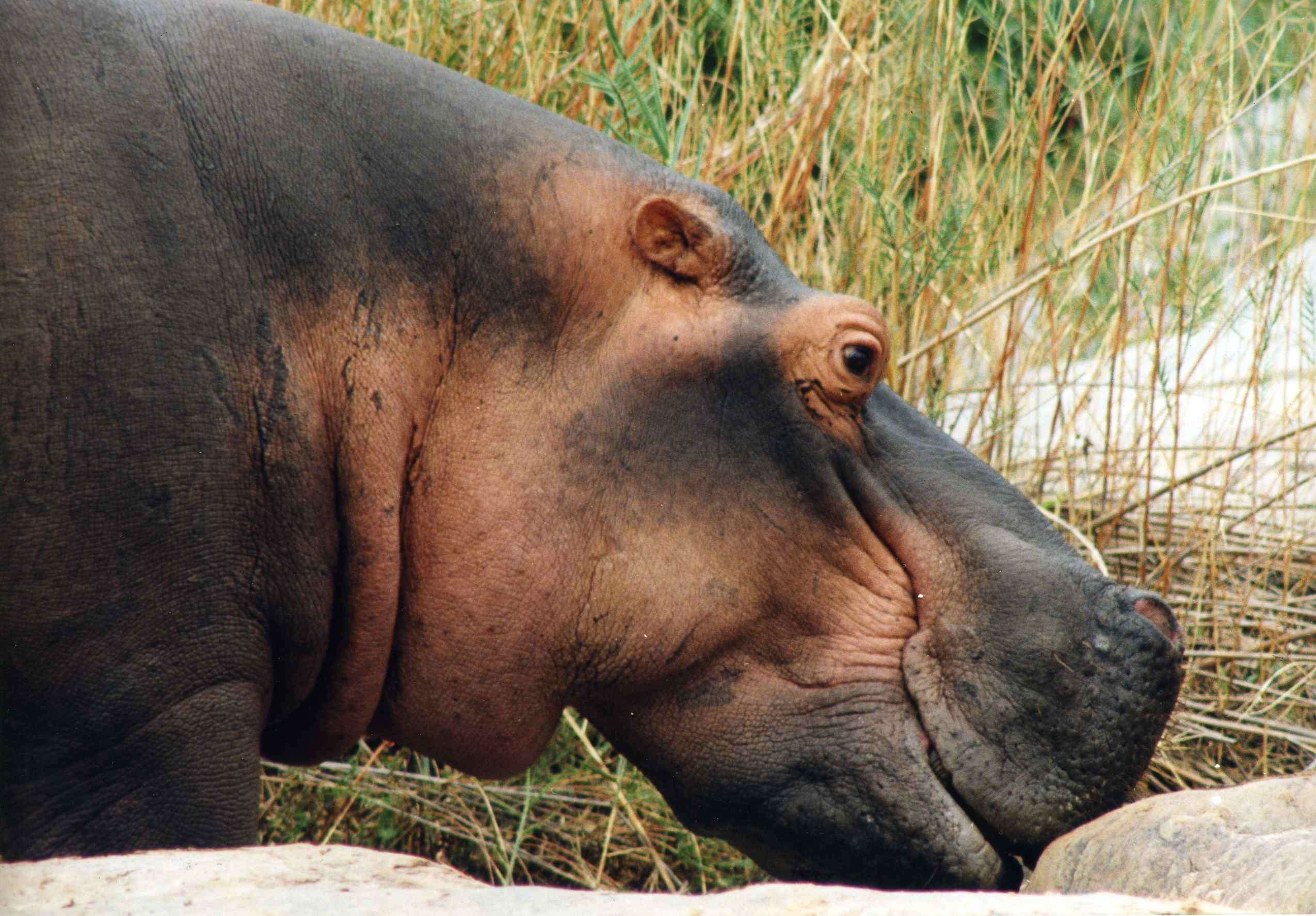 In Memory of Bob Hippo  1950's-2003