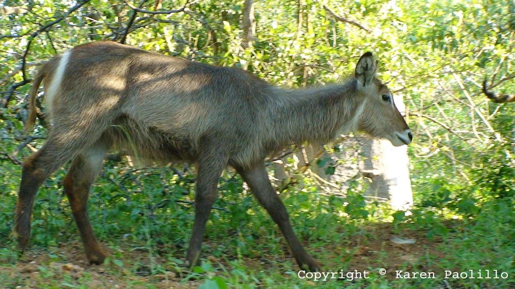 Mar. 2013 – Wildlife near Turgwe Hippo Trust