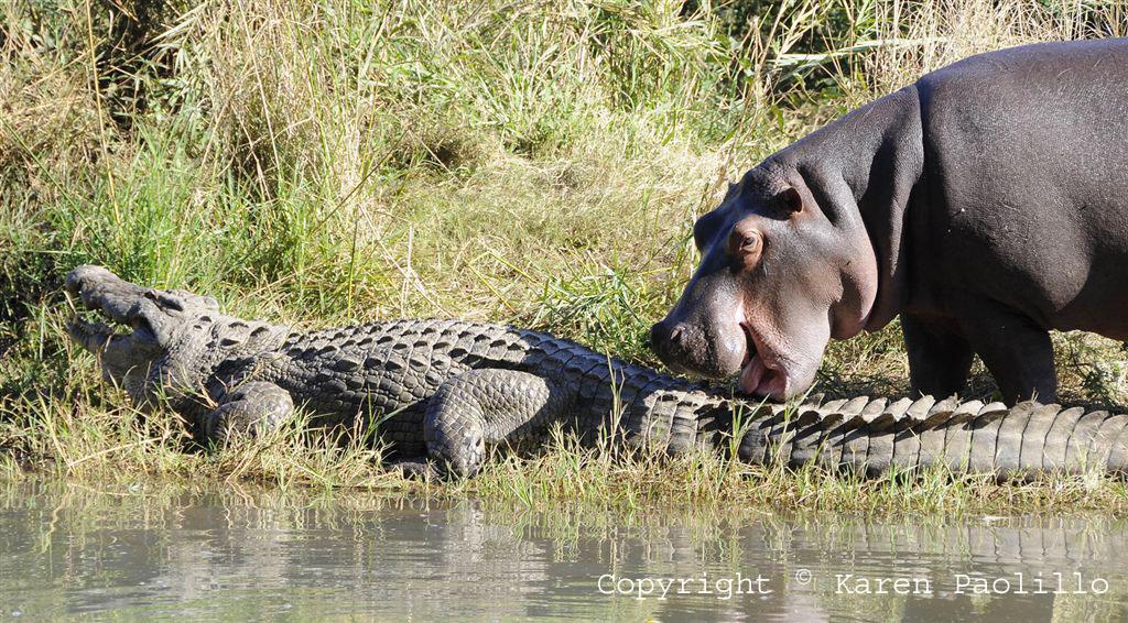 Aug. 2010 – Birds, Crocs and Hippos