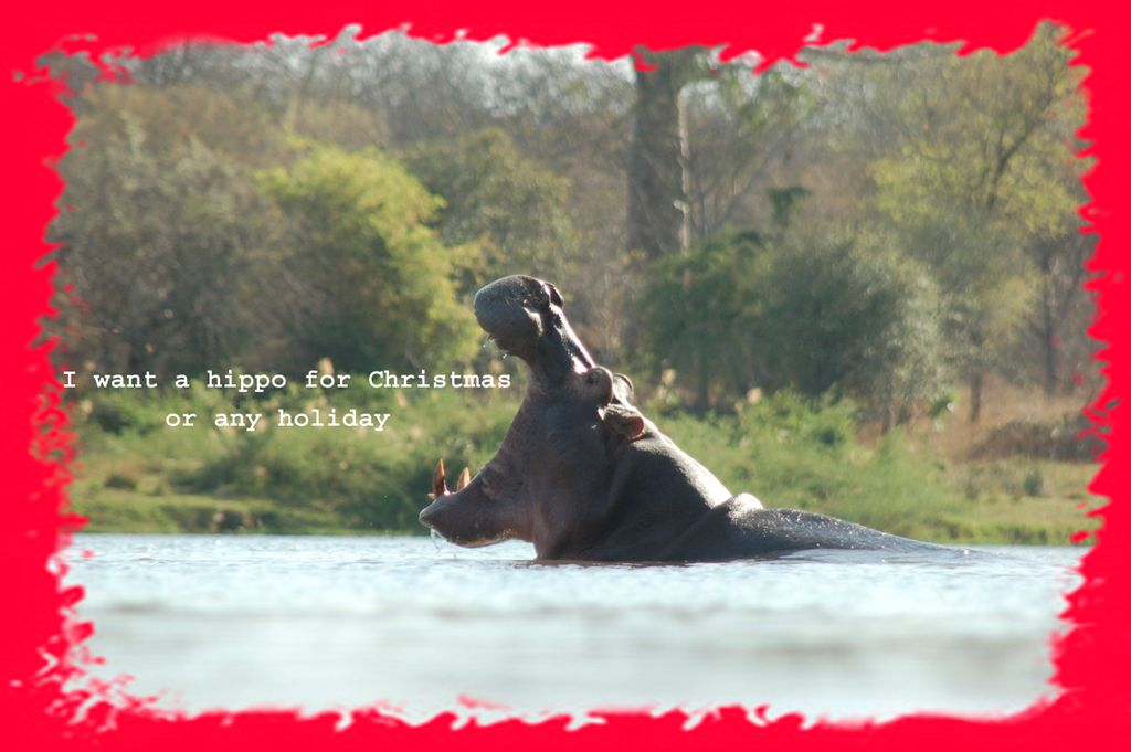 I want a hippo for Christmas !!