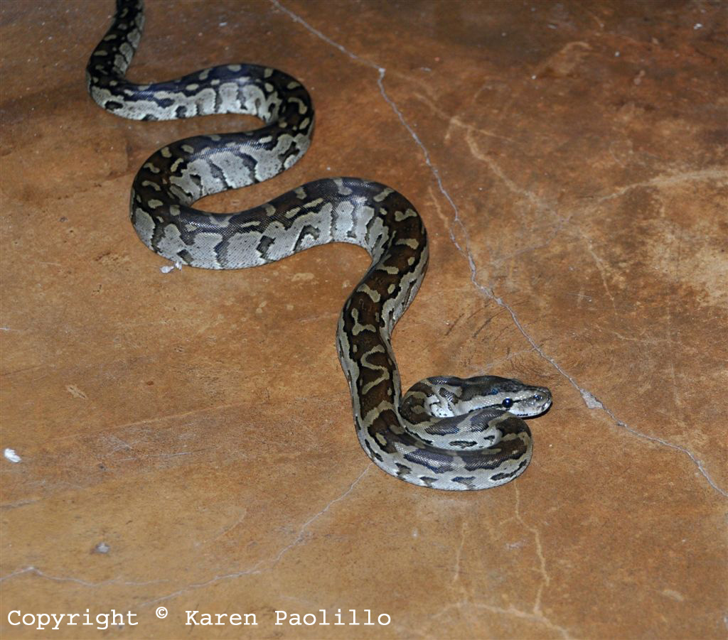Feb. 2012 – Surprise visit from a Snake