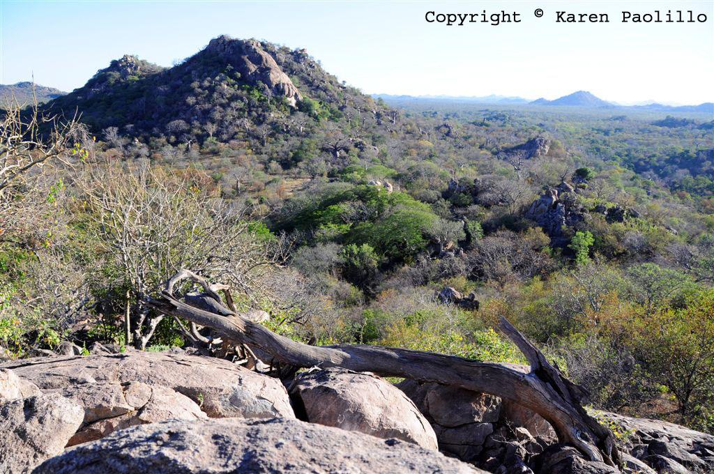 July 2011 – The Bush, Baobab, Elephants and Hippos