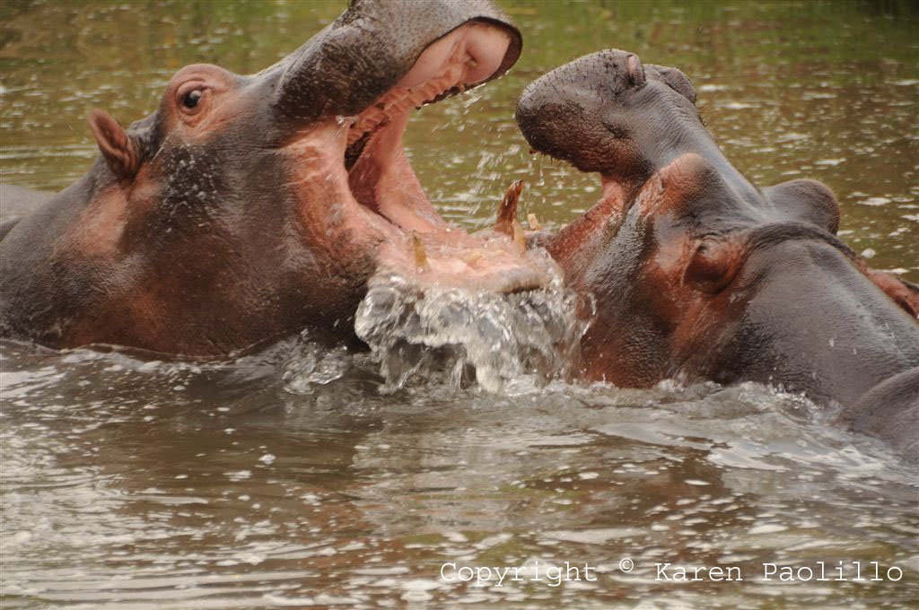 Sep. 2010 – Karen and the Hippos