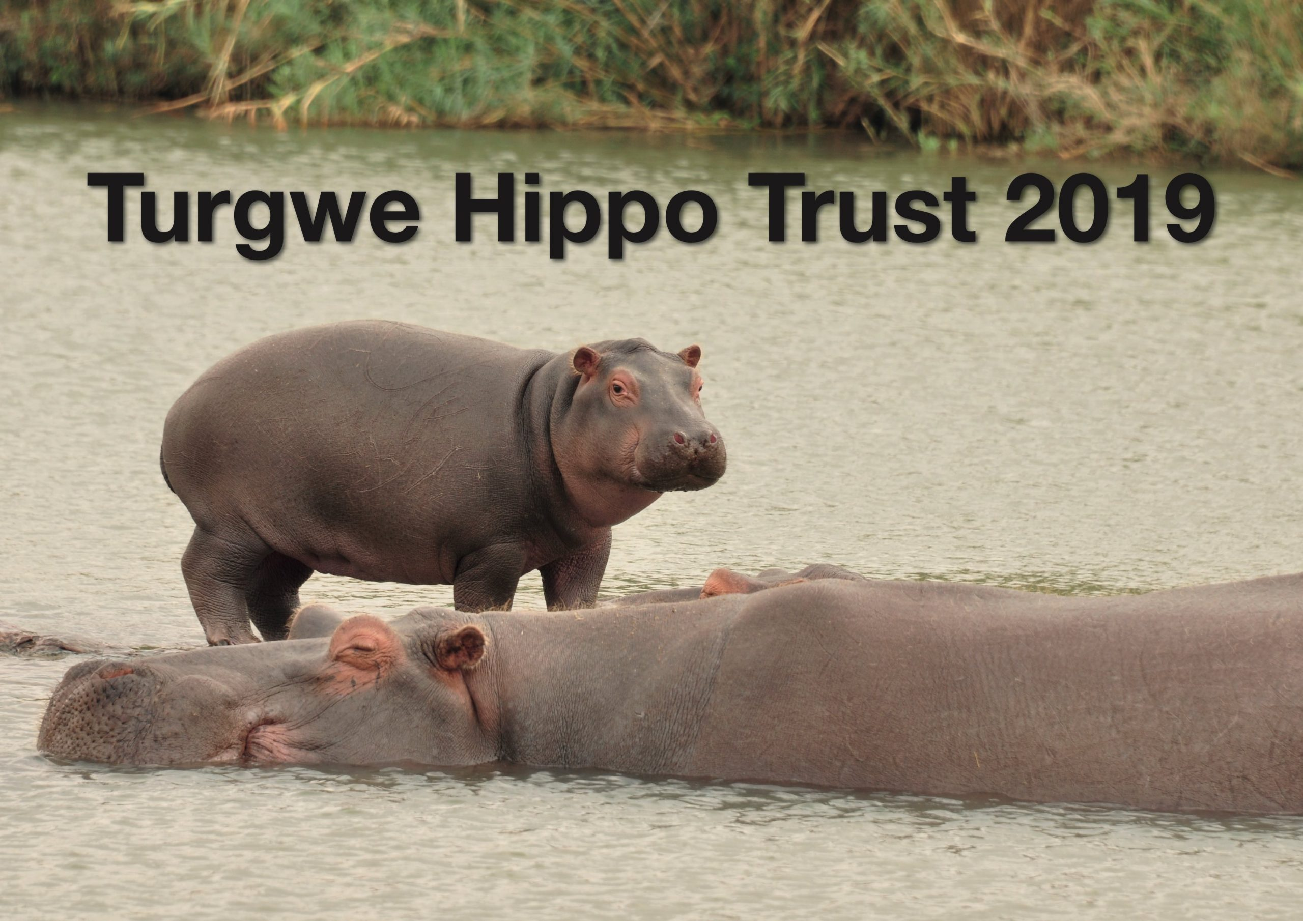 New 2020 Turgwe Hippo Trust Calendar is ready