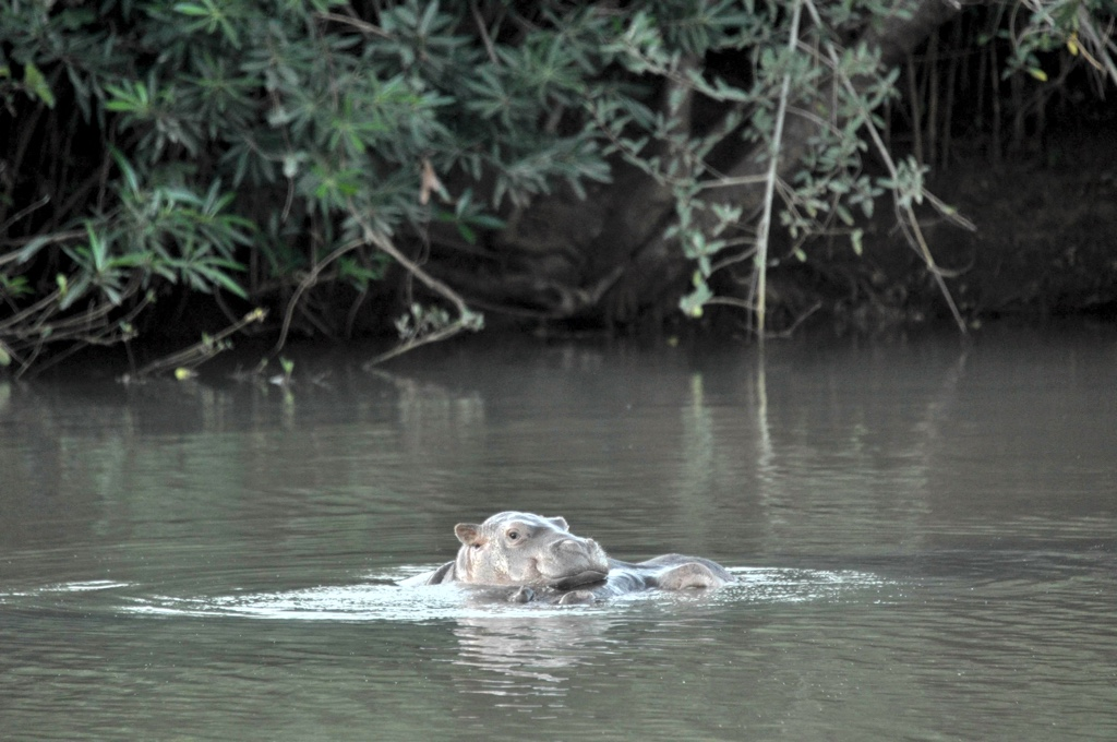 New Baby Hippo Naming Draw – May 2020
