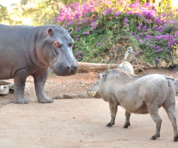 Steve and warthog